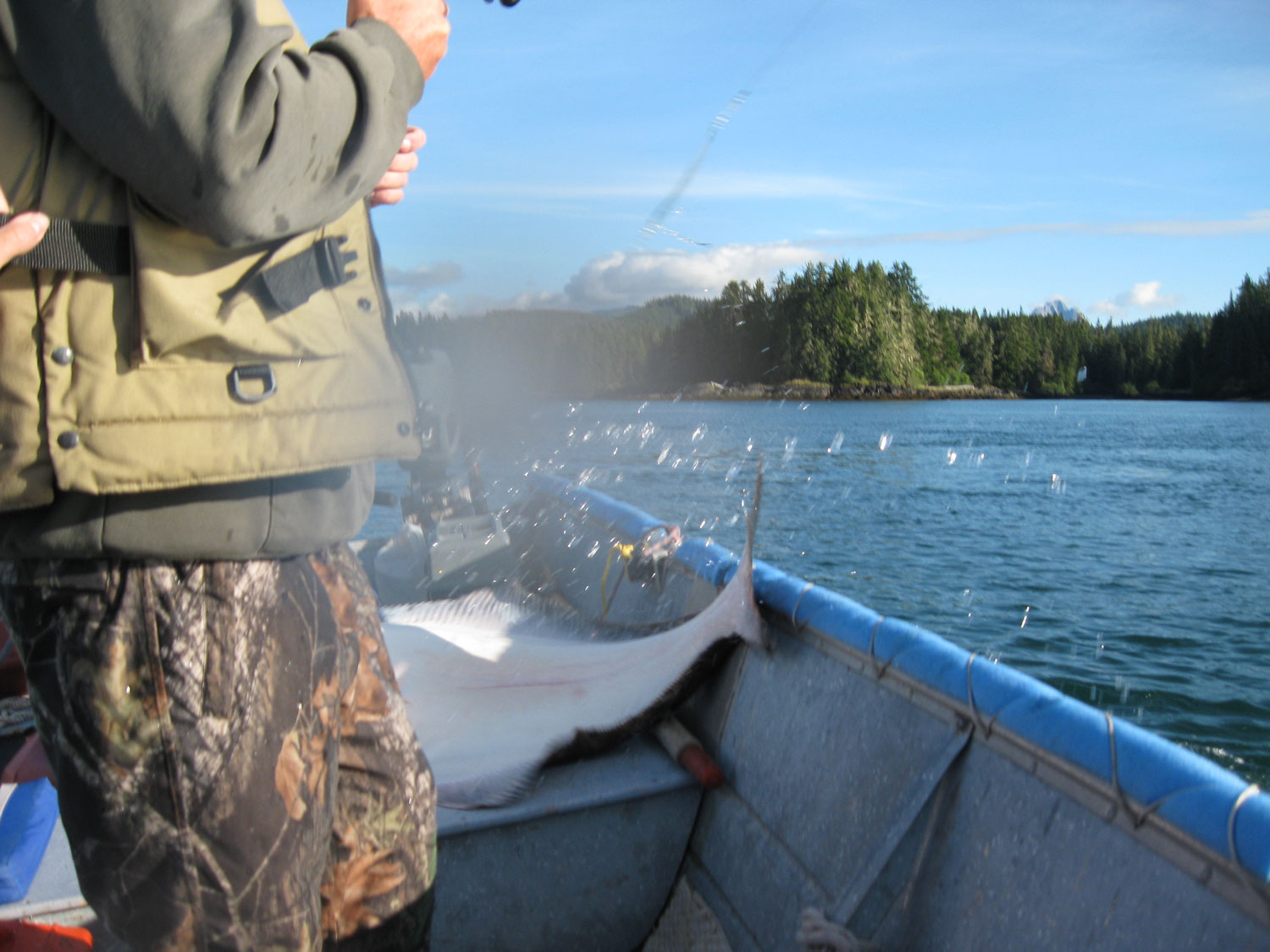Halibut in skiff