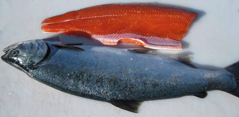 Silver salmon fillet.