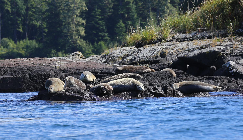 Seals_rocks_0155.jpg