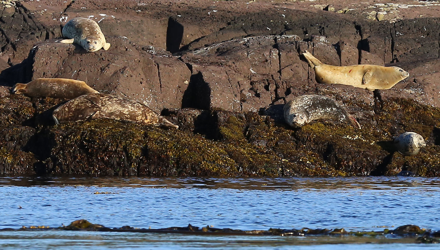 Harbor seals hauled out near Point Baker
