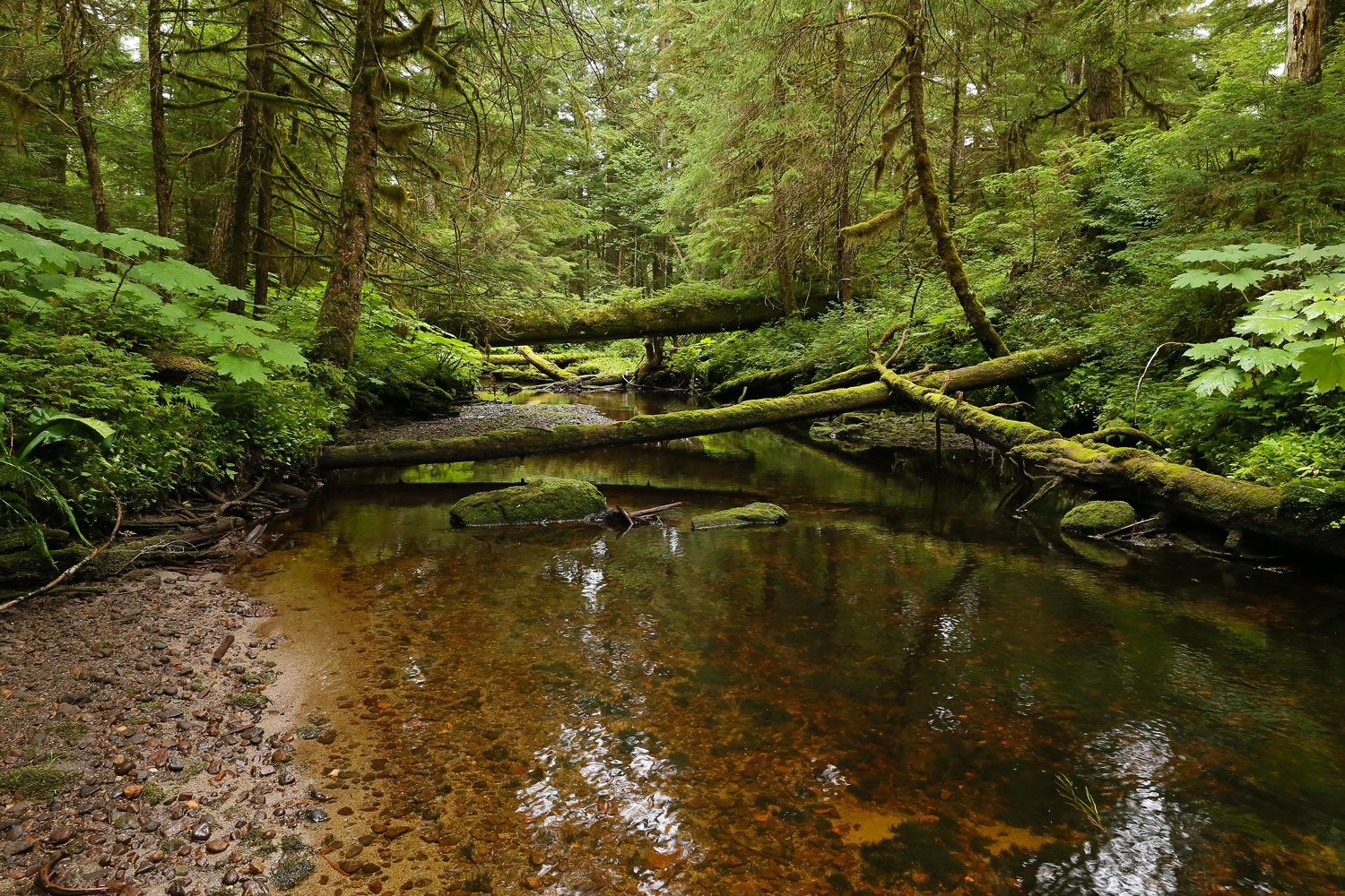 Stream through Southeast Alaska with log bridges