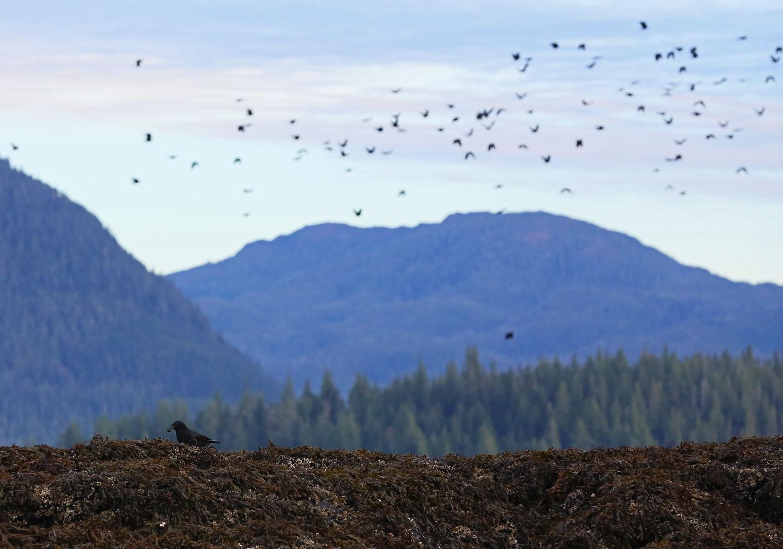 Crows_1816.jpg