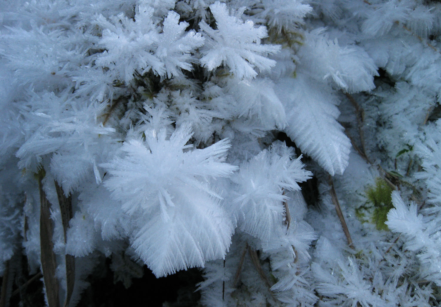Various forms of hoarfrost form a garden on frozen moss and dead grass.