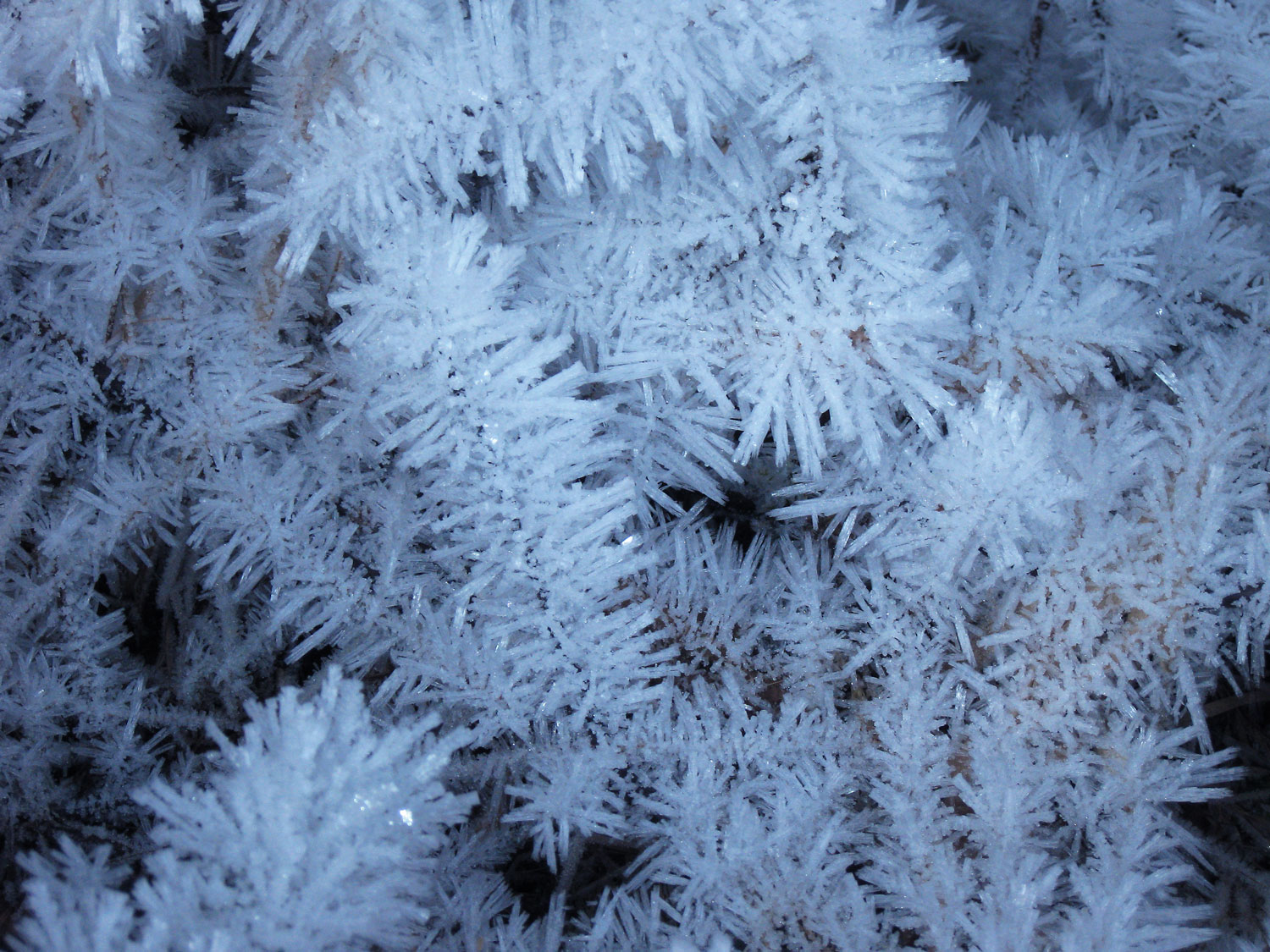 Grass covered with frost spicules.