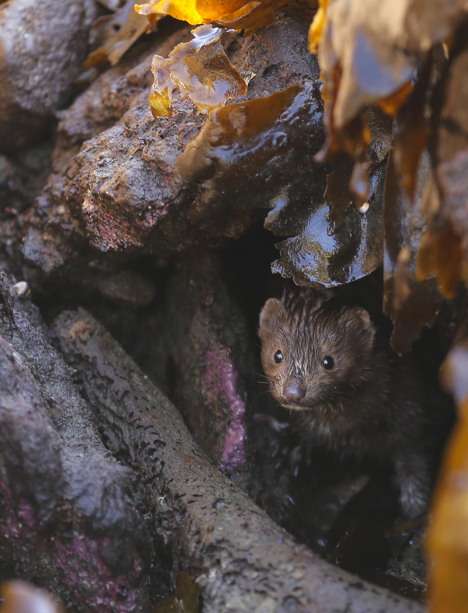 Mink cave beach Southeast Alaska kelp