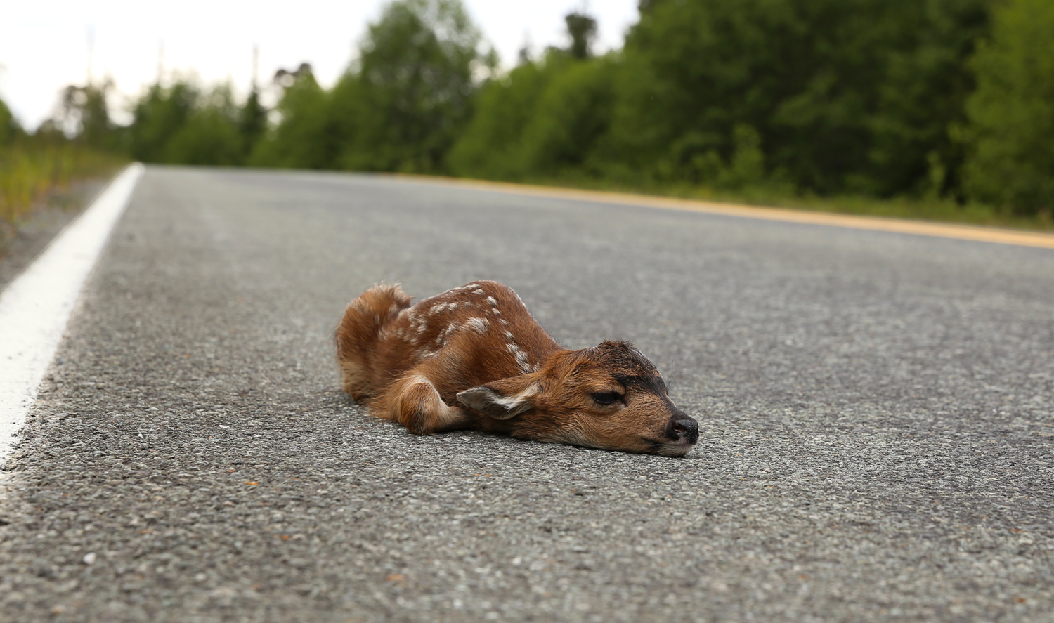 This baby is doing fine. Mama Deer will be back and collect her up in a few minutes.