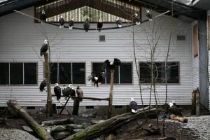 The Flight Training Center at the Alaska Raptor Rehabilitation Center. Photo courtesy of the Alaska Raptor Center.