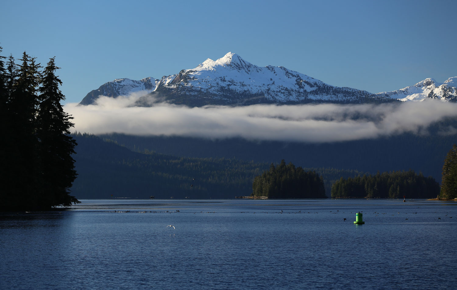 Southeast Alaska islands birds buoy mountains fog