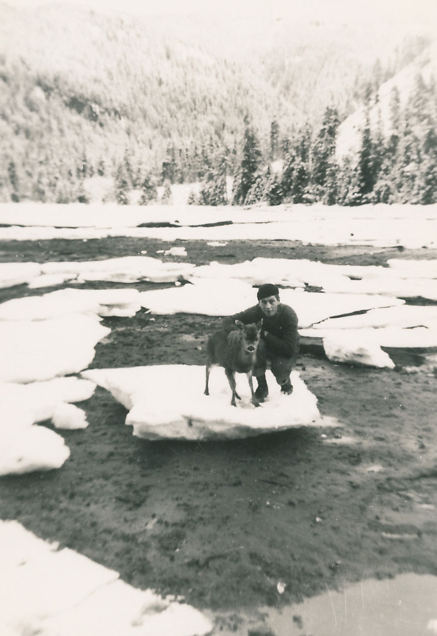 Pet fawn in Southeast Alaska Hood Bay 1950