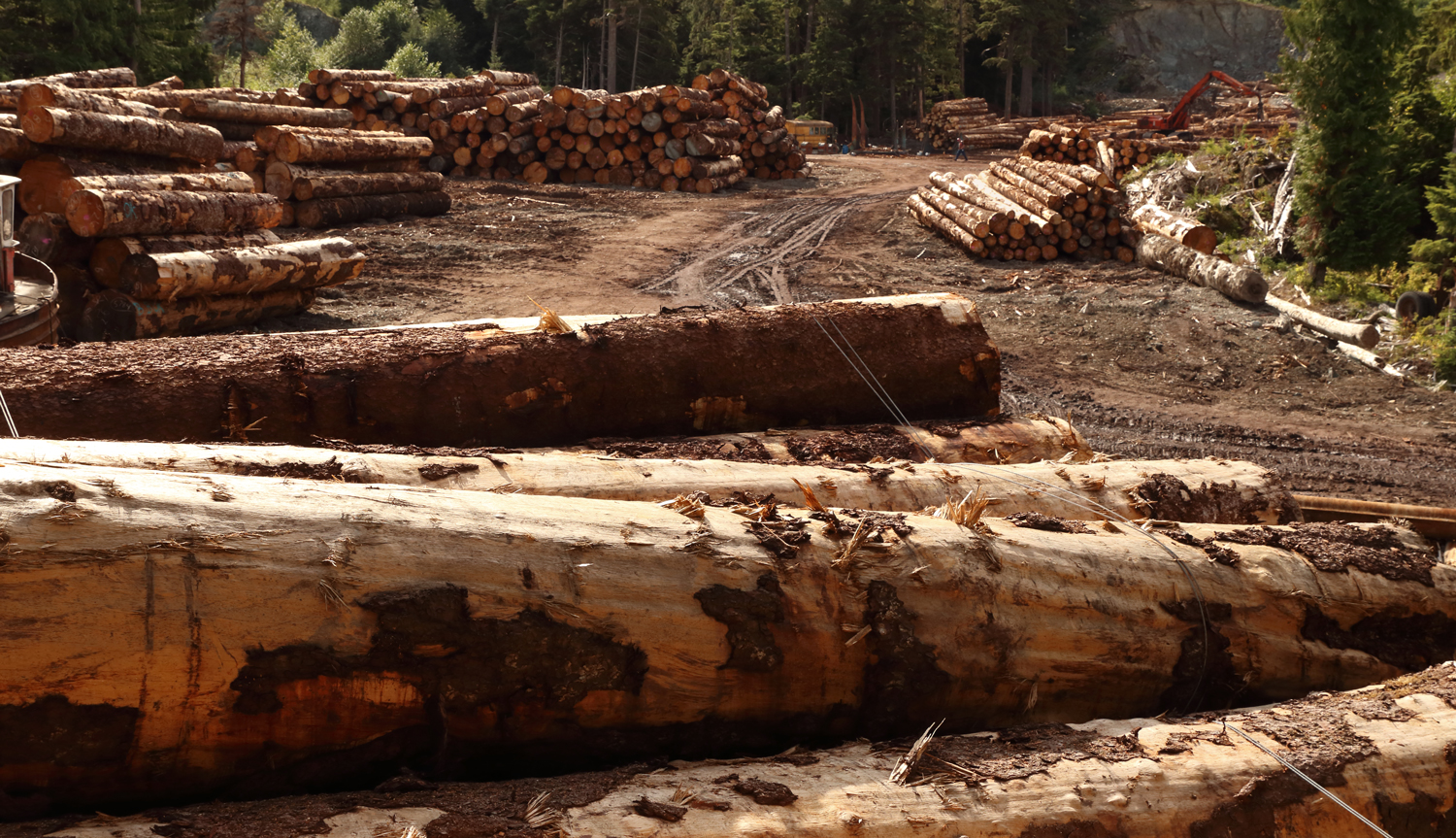Logging sort yard with stacks of logs on Prince of Wales Island in Southeast Alaska