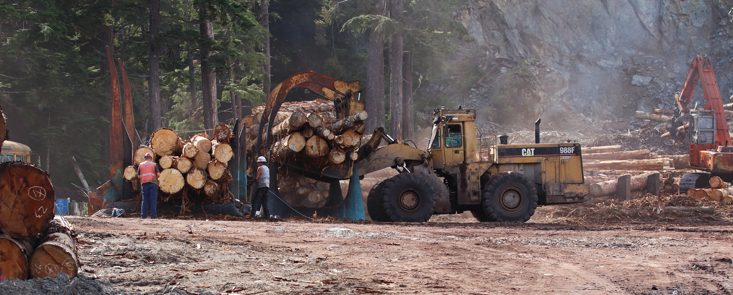 Scaling, marking, and bundling logs at a sort yard on Prince of Wales Island in Southeast Alaska