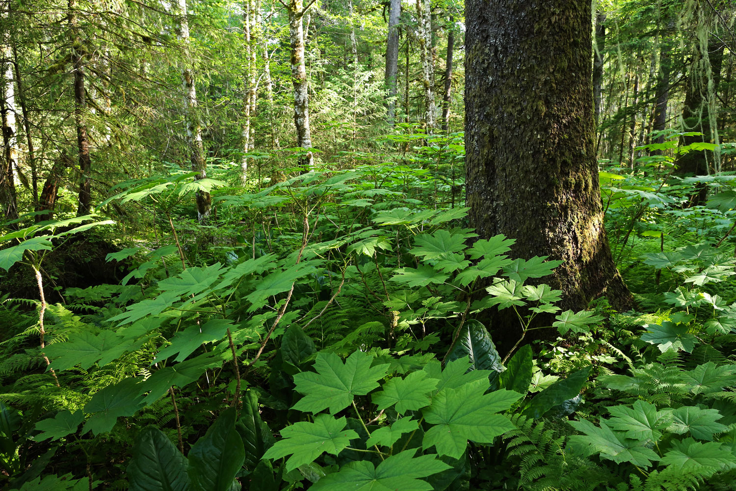 A healthy forest understory has a wide variety of plants.