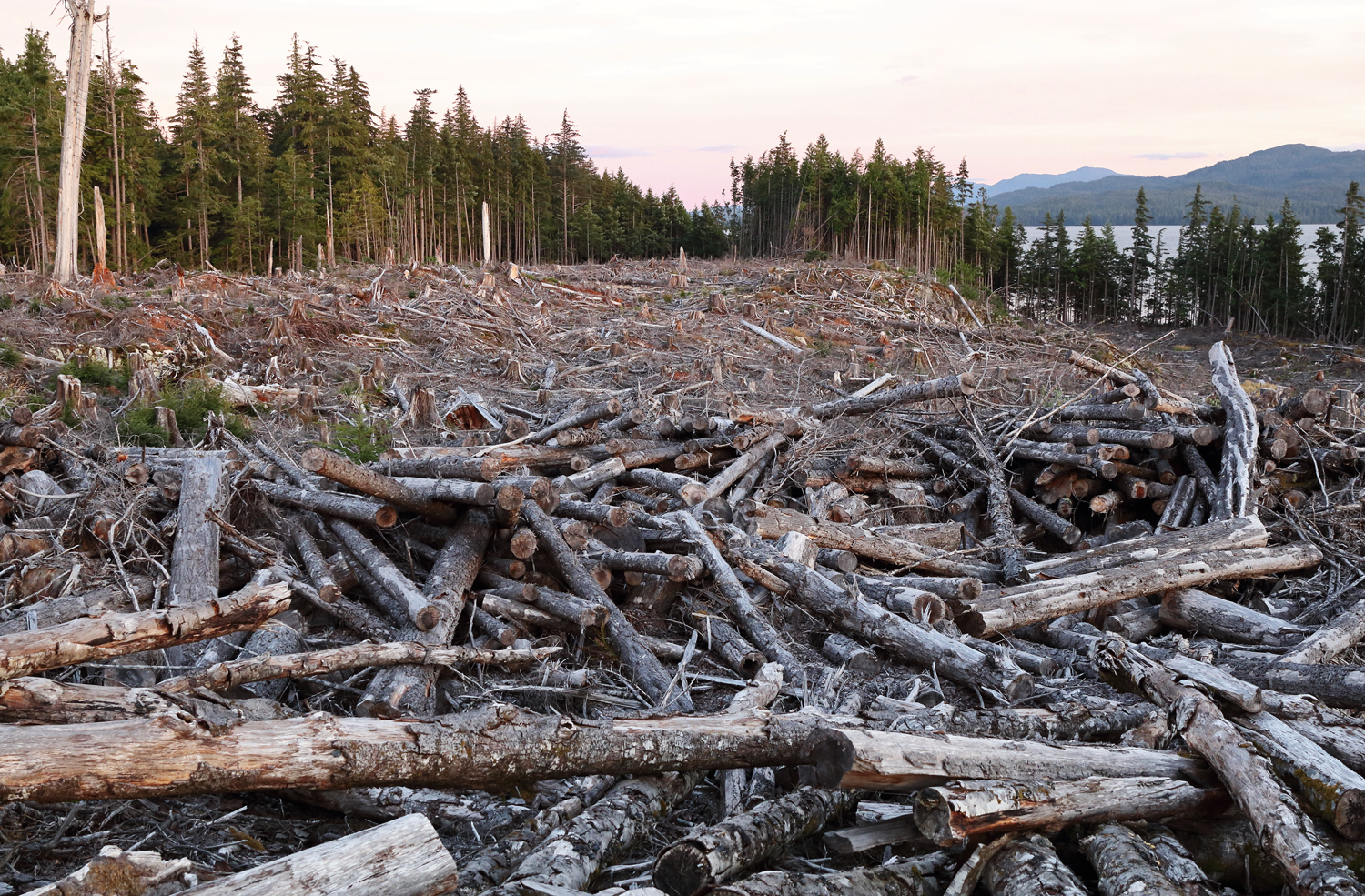 A recent clearcut in Southeast Alaska.