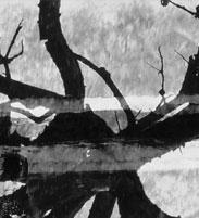 fragment5.jpg