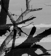 fragment3_6.jpg