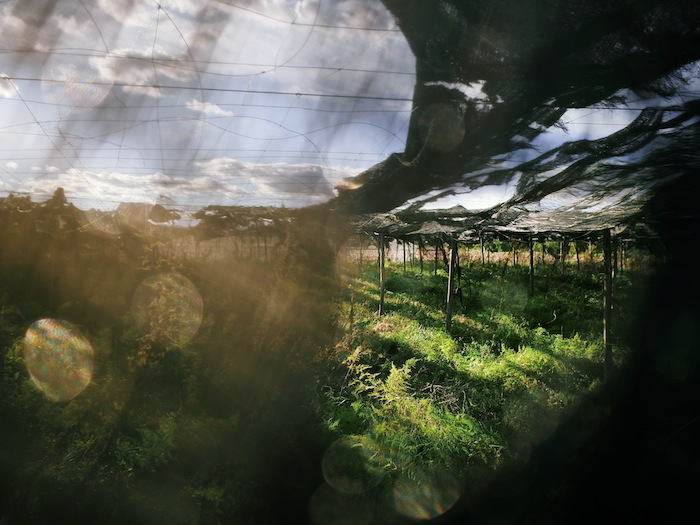 Valencia images. Picanya. Abandoned greenhouse. © Daniel Belenguer