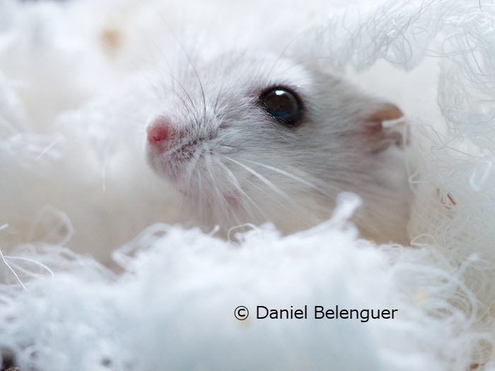 Chocobola © Daniel Belenguer