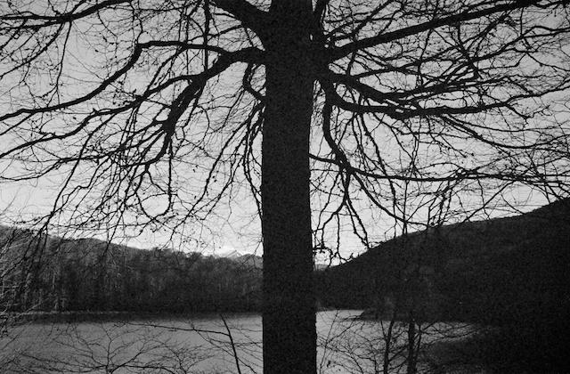 Selva de Irati. © Daniel Belenguer