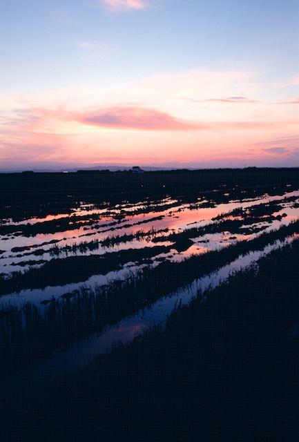 Spain pictures. Rice fields semi-inundated near El Palmar. © daniel belenguer