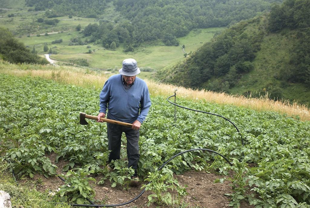 Agricultor en su campo, Somiedo. Asturias.