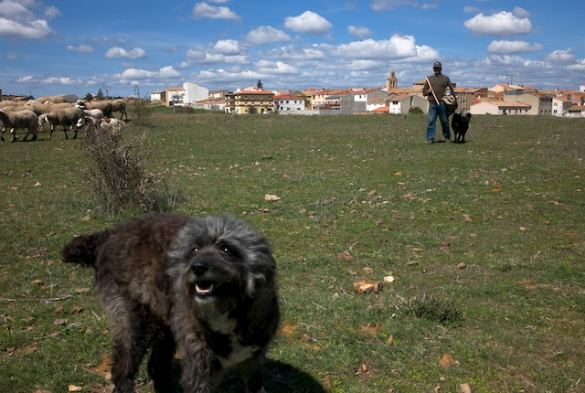 Sheep dog and sheepherd in Talayuelas, Cuenca, Spain. Talayuelas is a municipality located in the province of Cuenca, Castile-La Mancha, Spain. According to the 2004 census (INE), the municipality has a population of 1,144 inhabitants.