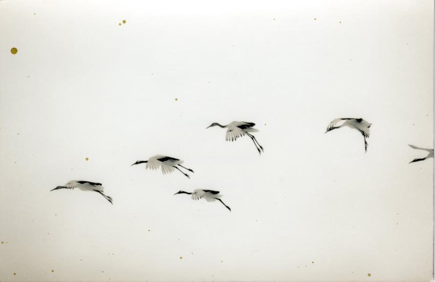 © Yamamoto Masao