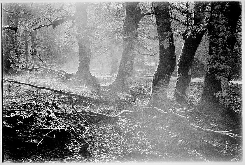 Fotografía tomada en el Parque Natural de Urbasa, más imágenes de Navarra en mi archivo.