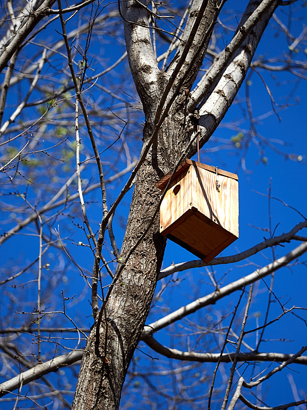 Caja nido para passeriforme.