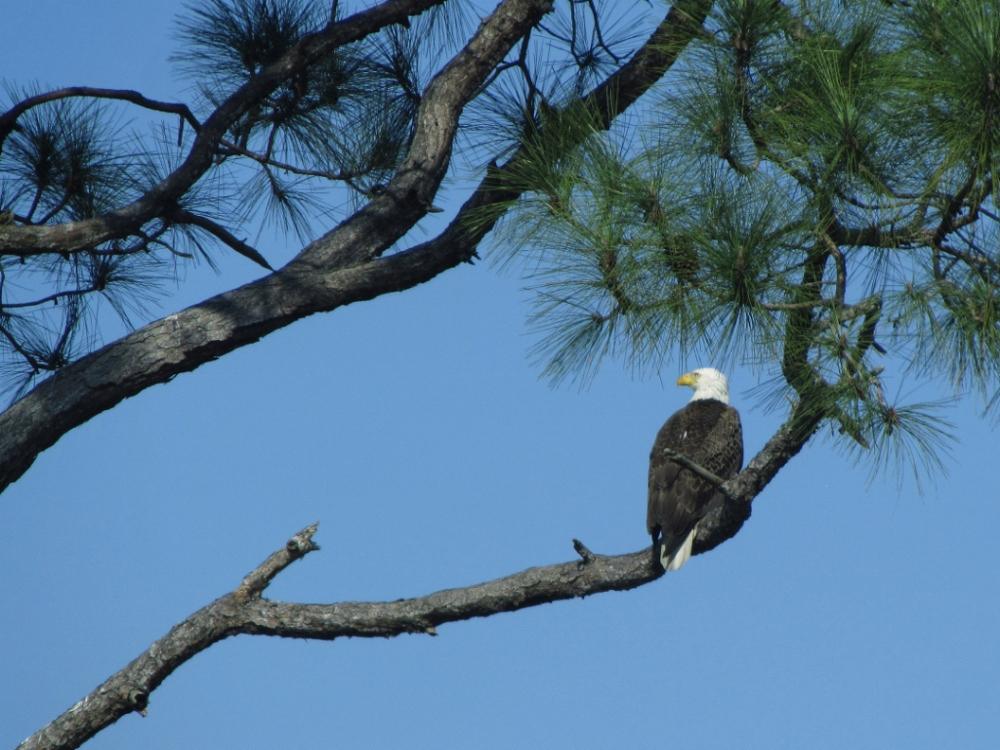 Florida 2011-048 (1000x750).jpg