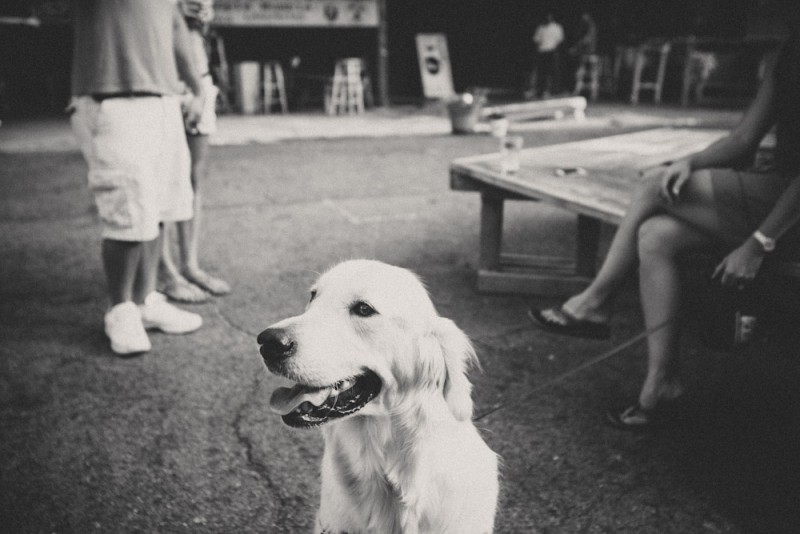 The Bearden Beer Market is super pet friendly. Though I've not seen many cats lurking around.