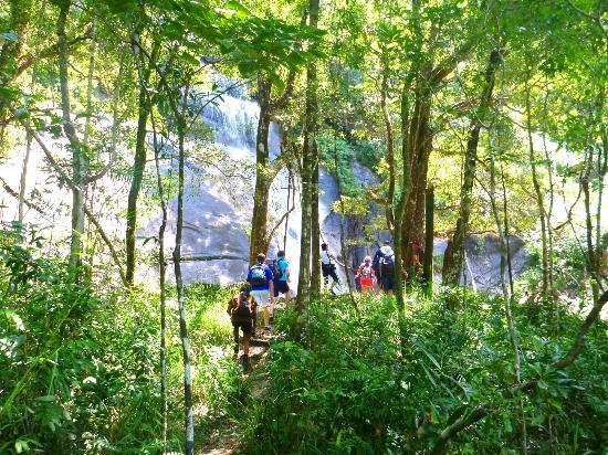 Rainforest walking tours