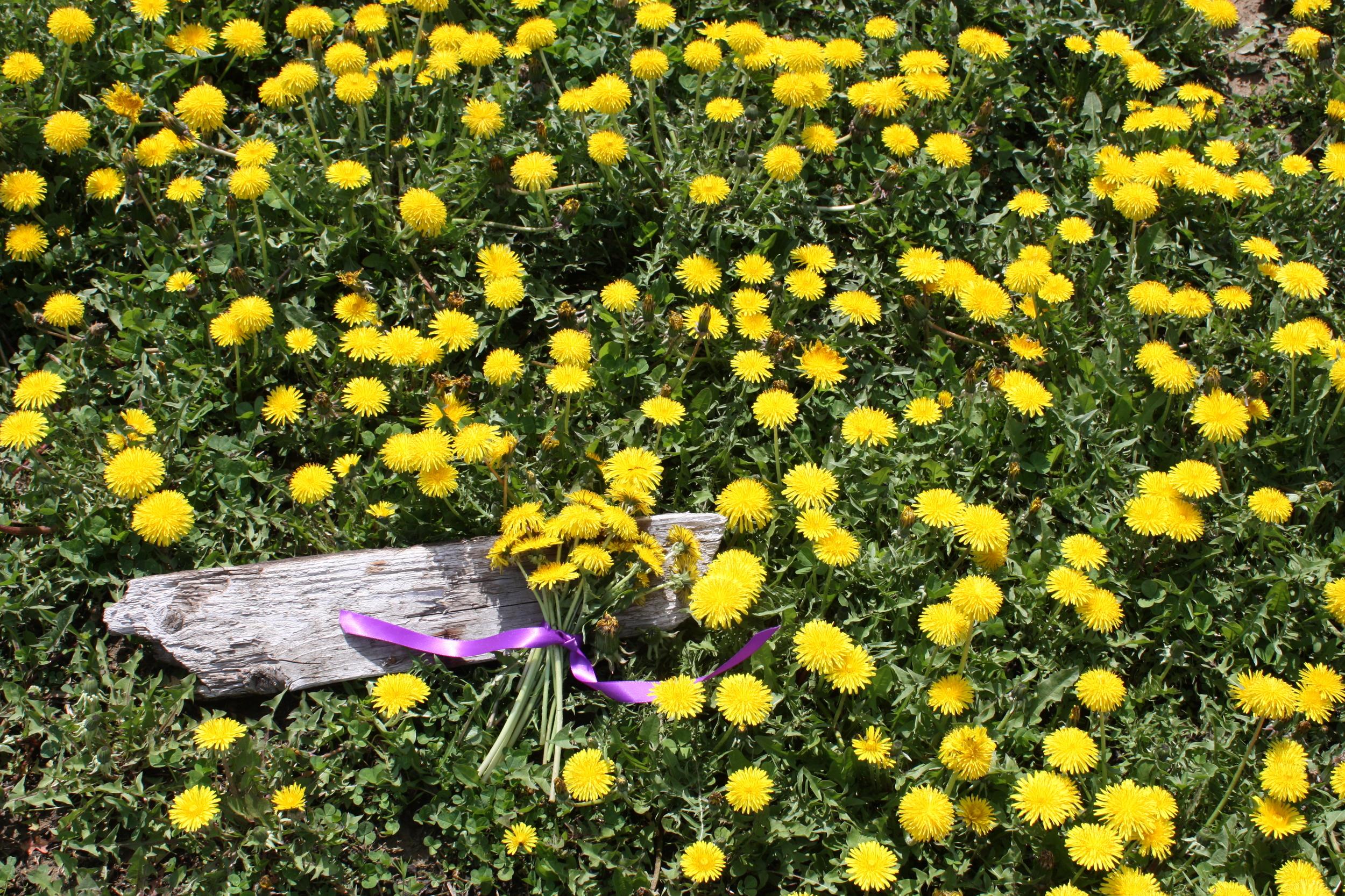 dandelions 2.jpeg