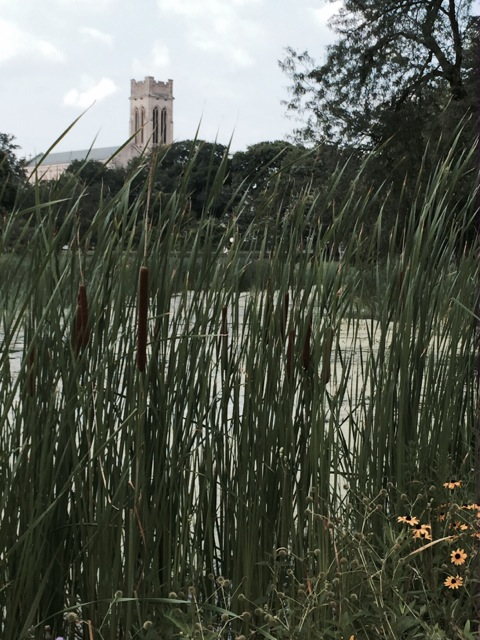 A cattail and a church...