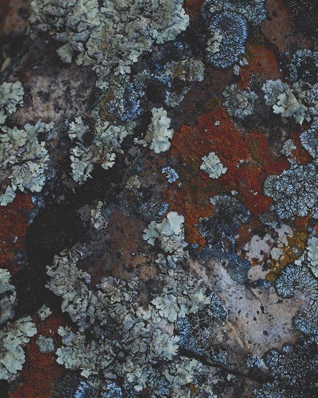 Bosque . . #natura #botanic #musgosyliquenes #photography #colors #instagood #life