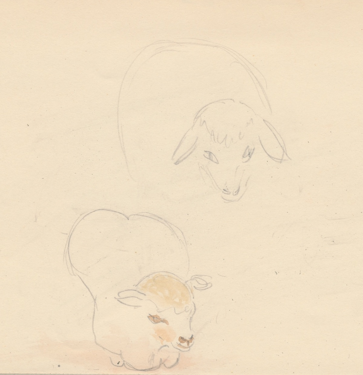 Animals008.jpg