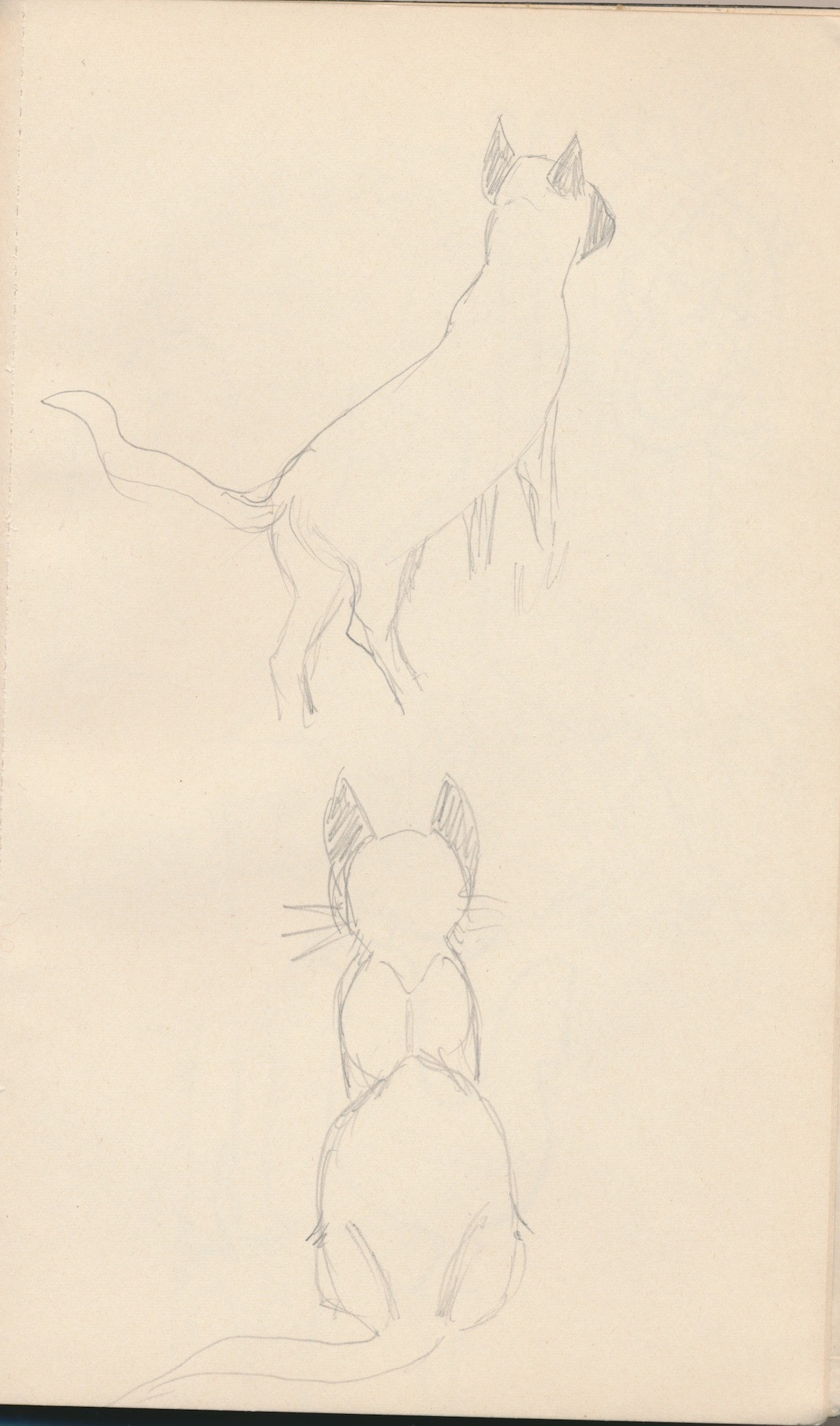 Animals012.jpg