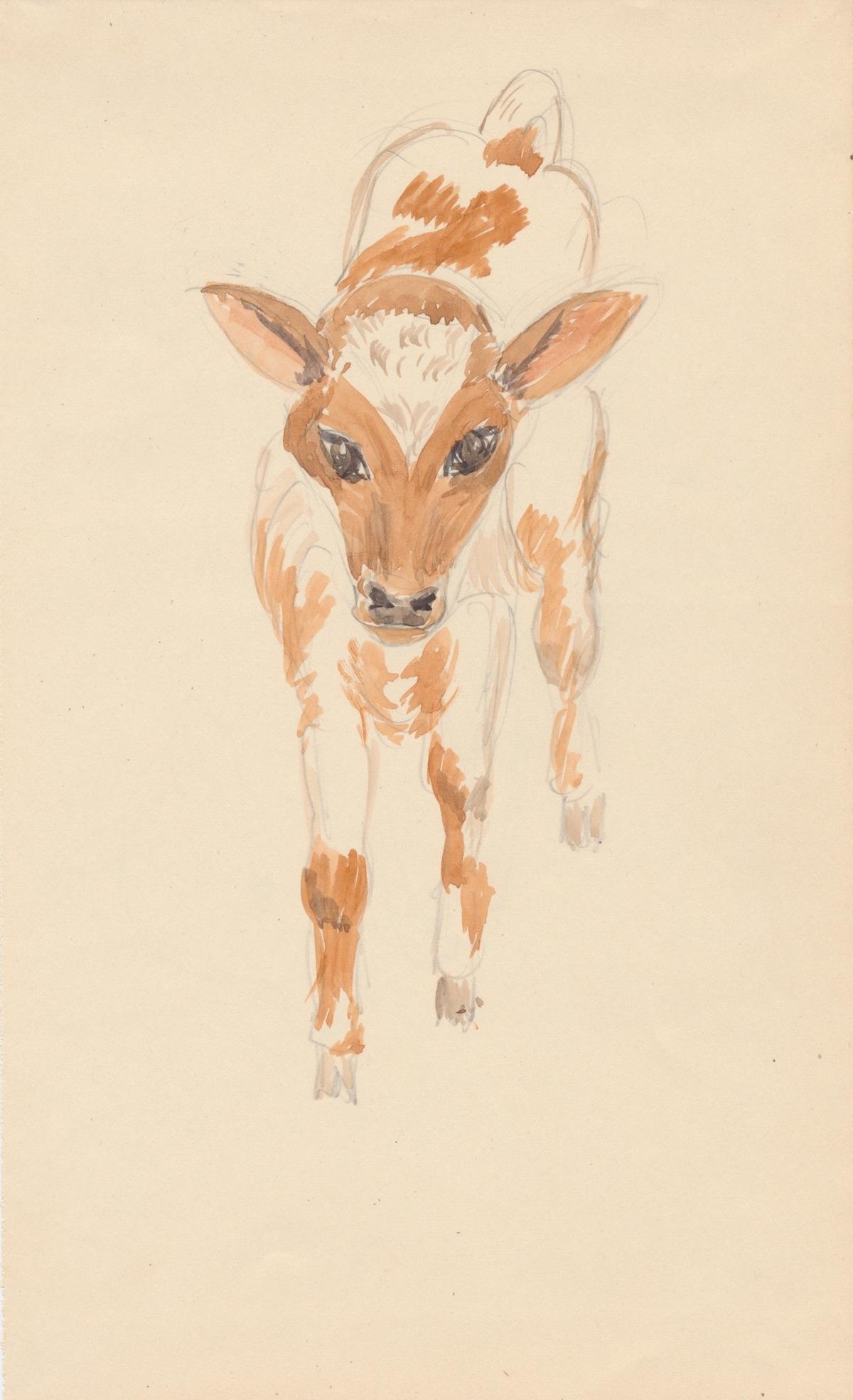 Animals013-2.jpg