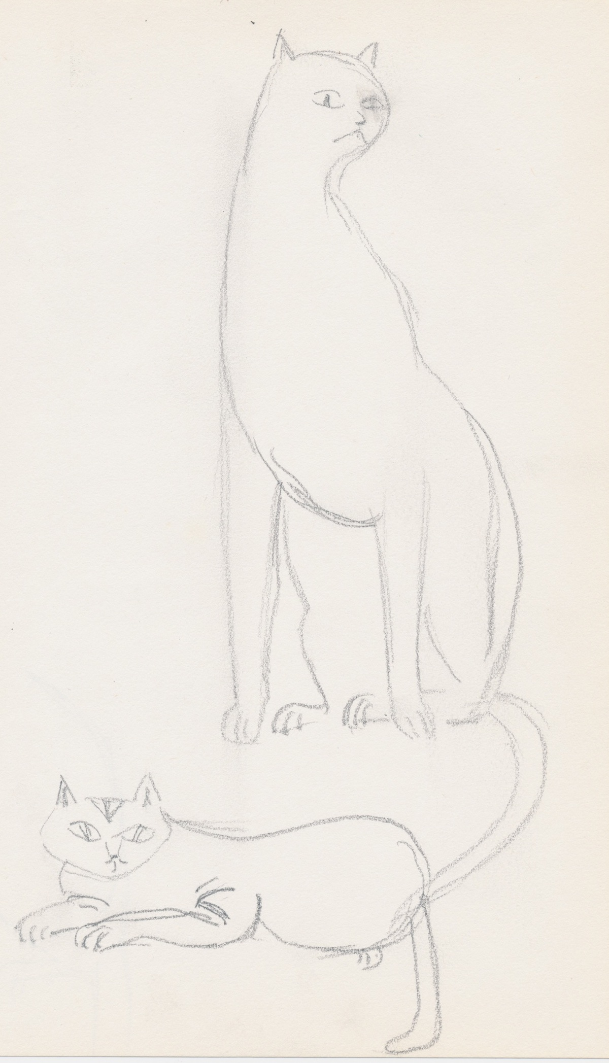 Animals014.jpg