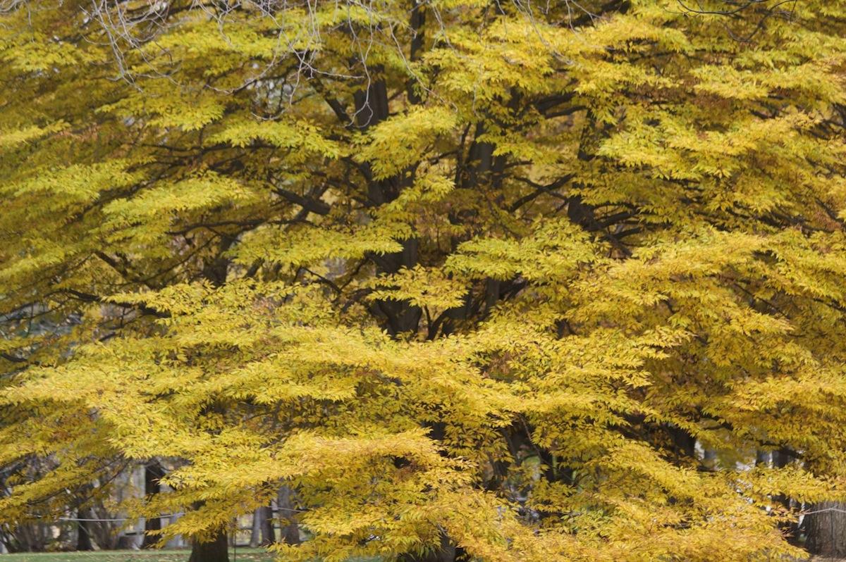 Trees06_original.jpg