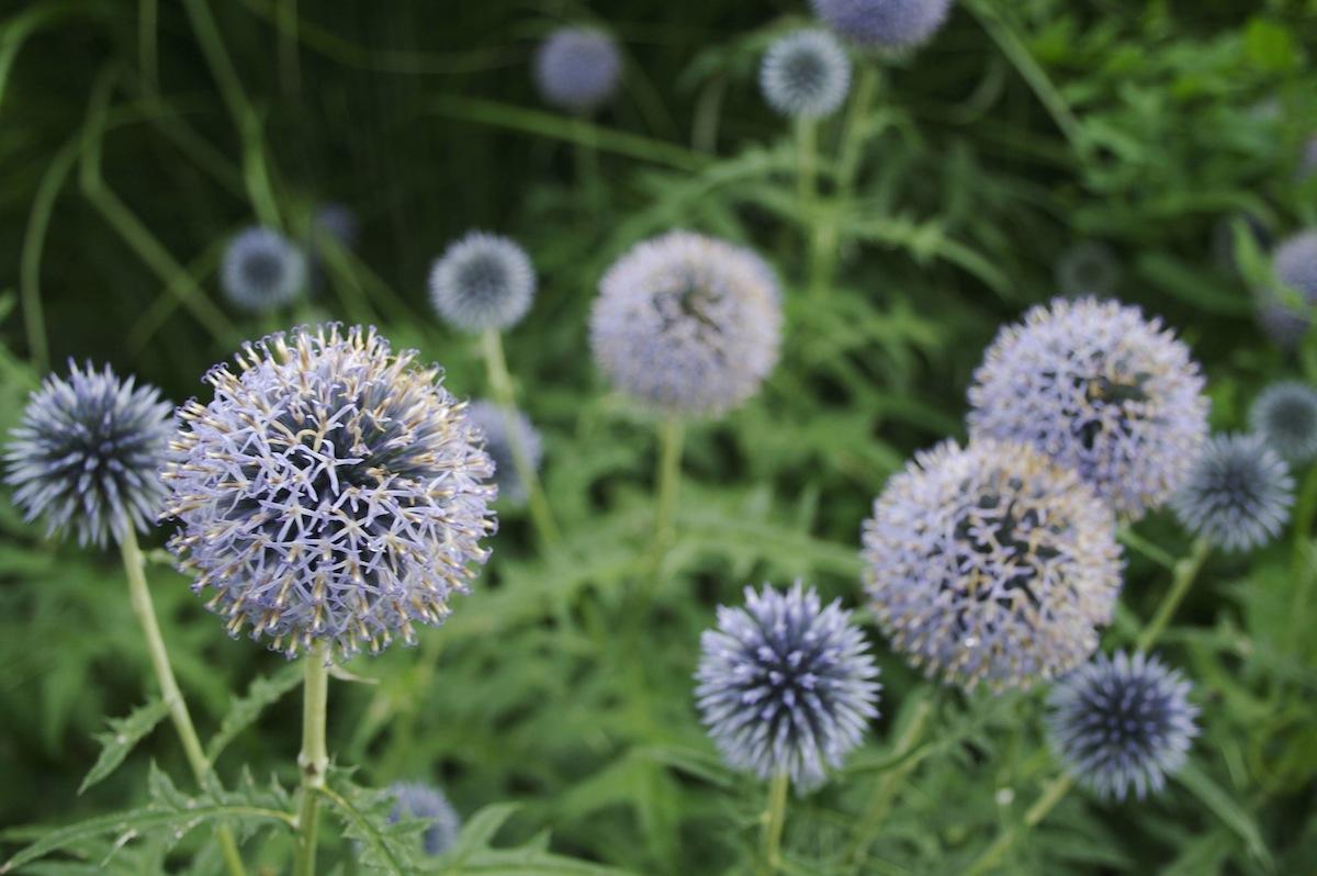 Flowers09.jpg