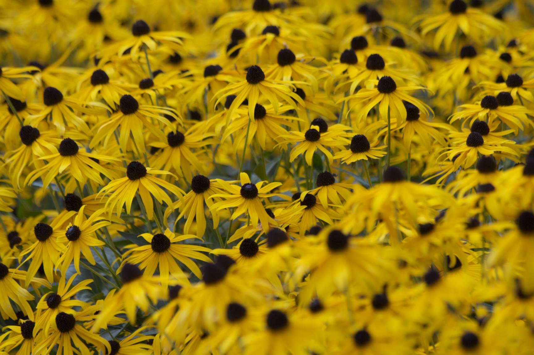 Flowers18_original.jpg