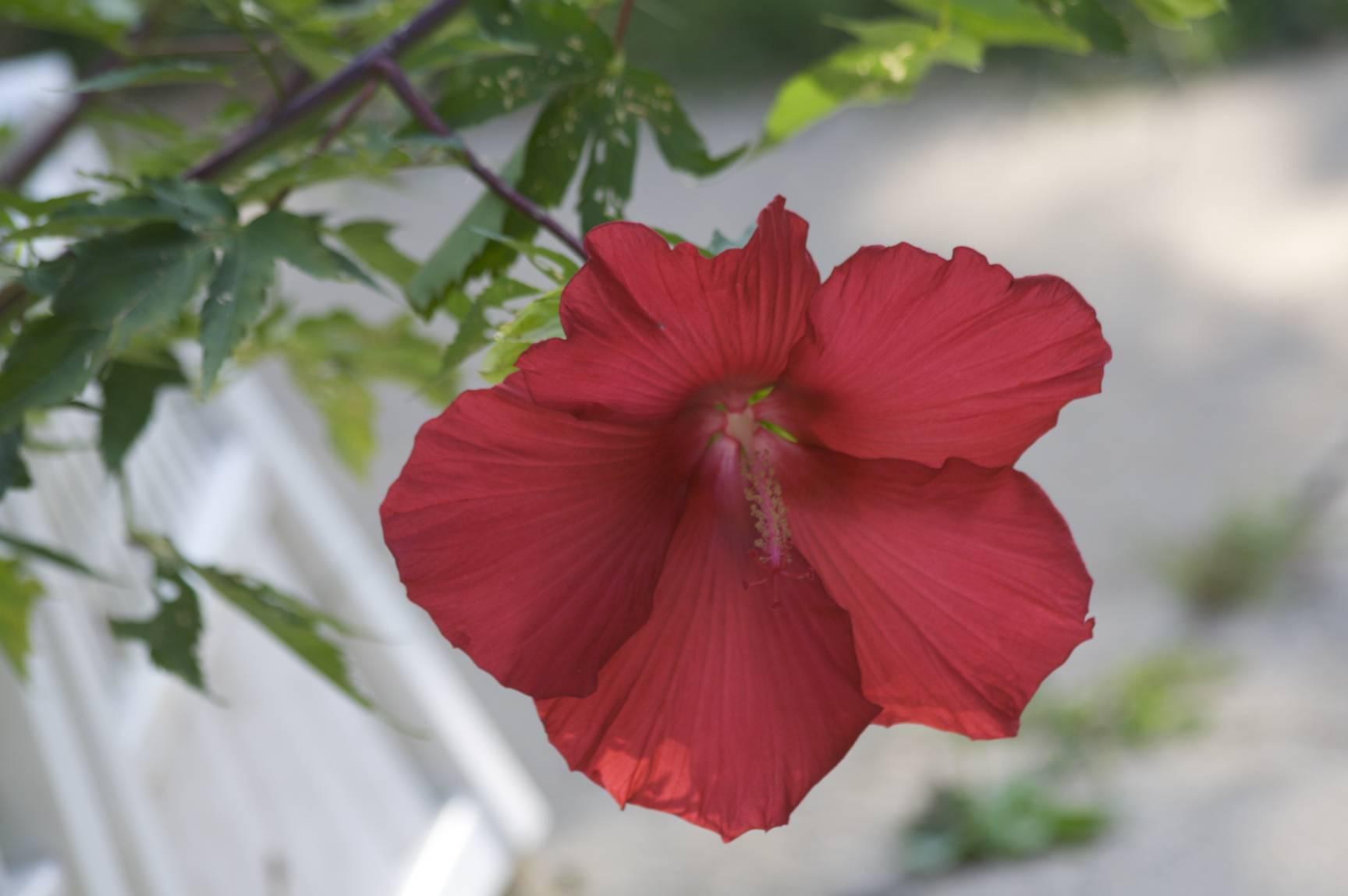 Flowers19_original.jpg