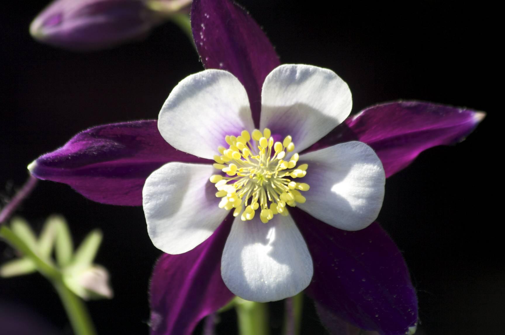 Flowers22_original.jpg