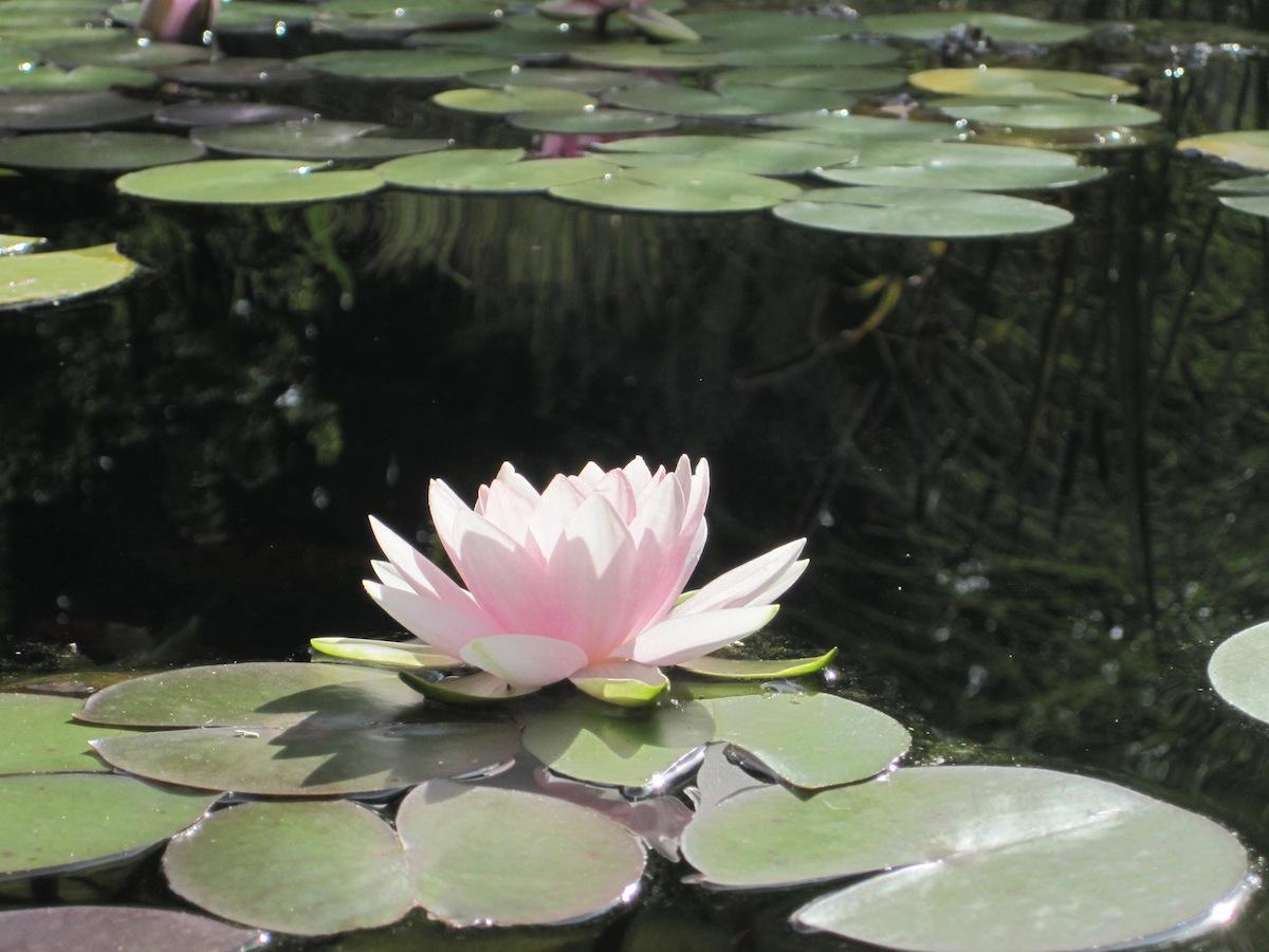 Flowers36.jpg