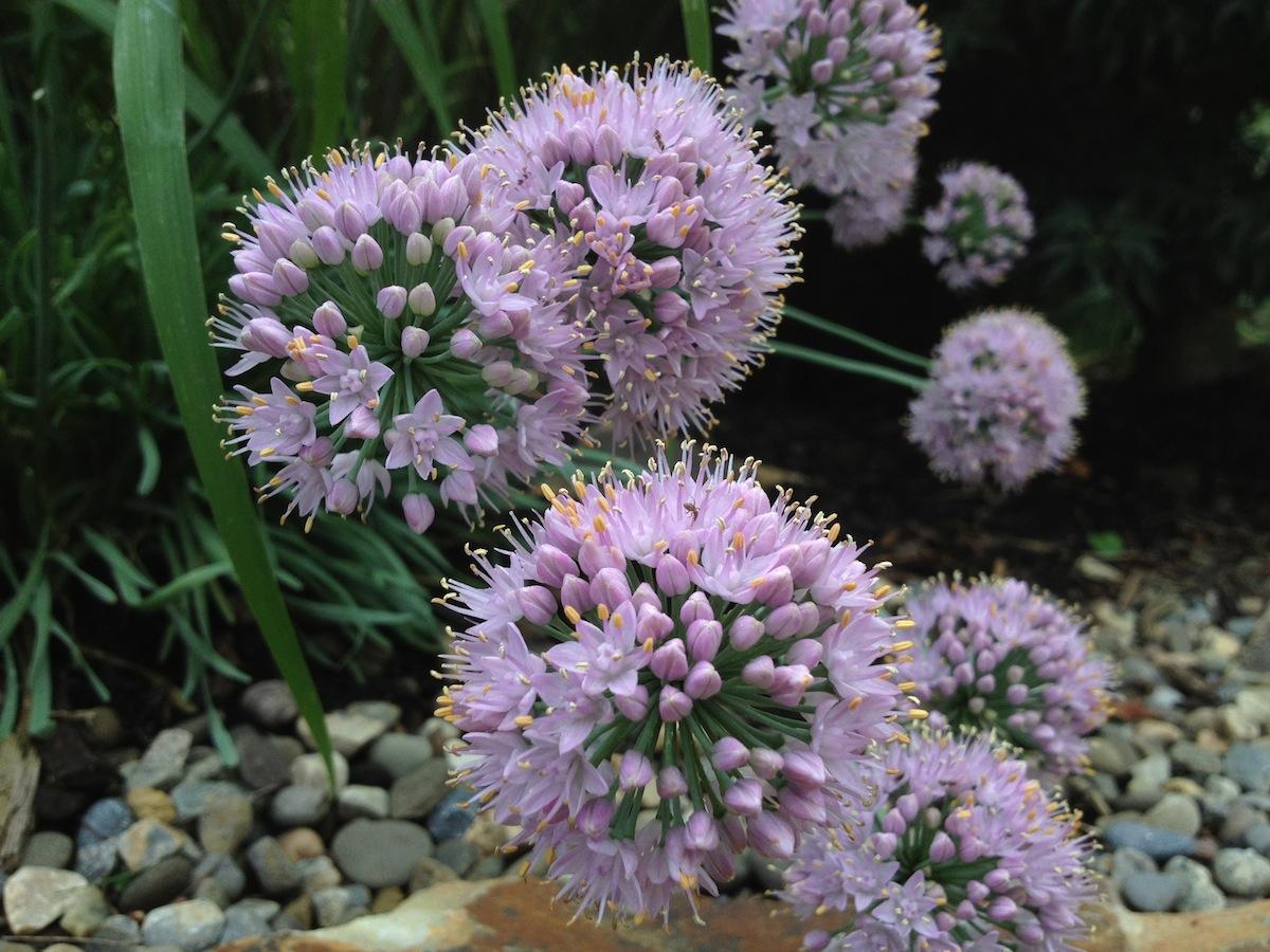 Flowers46.jpg