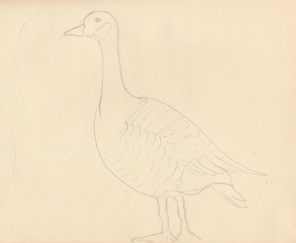 Birds002.jpg