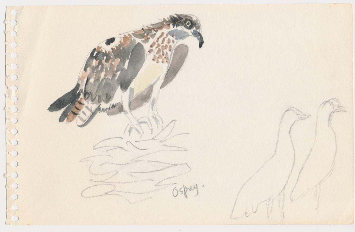 Birds007.jpg