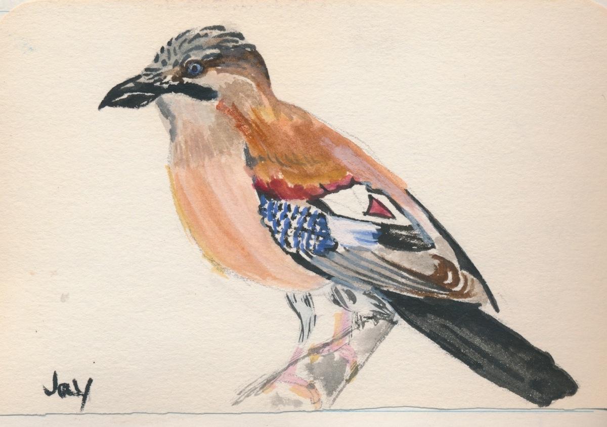 Birds016.jpg