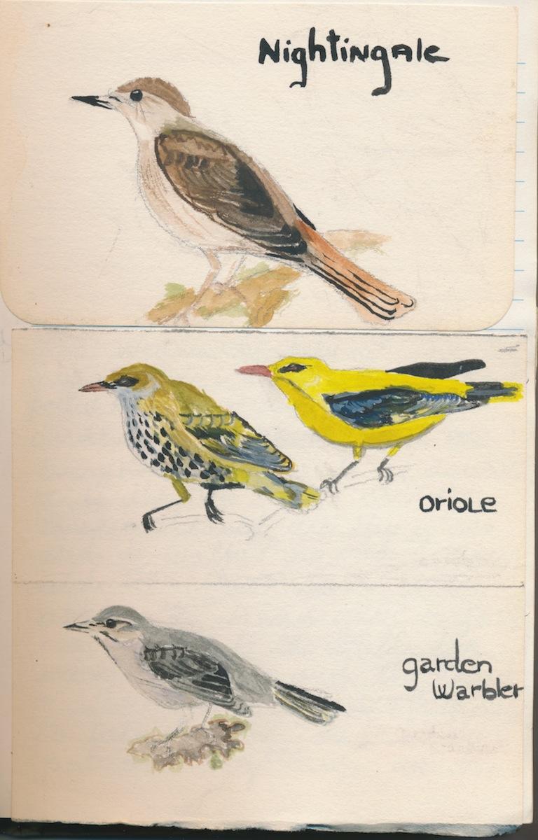 Birds017.jpg