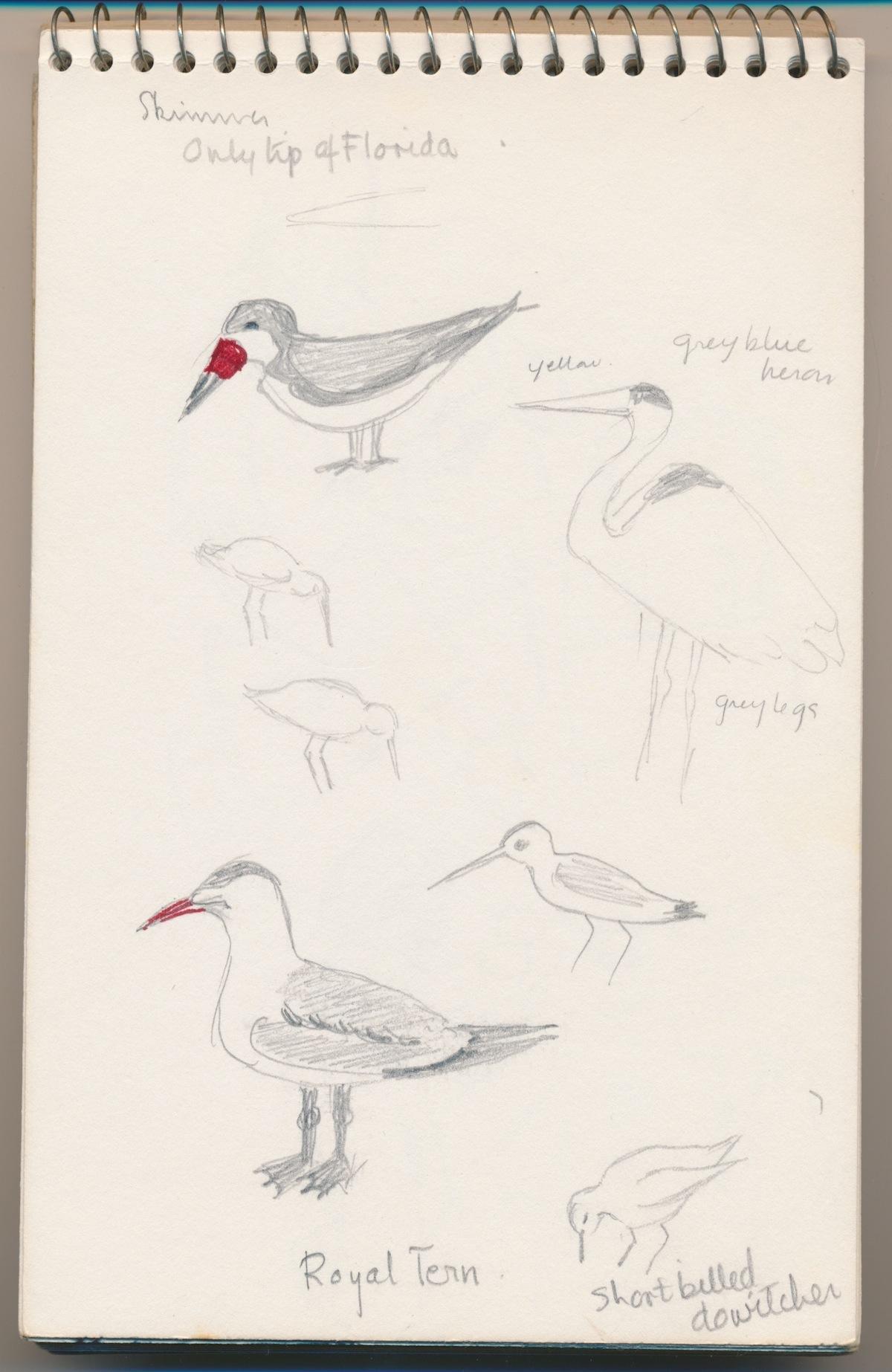 Birds021.jpg